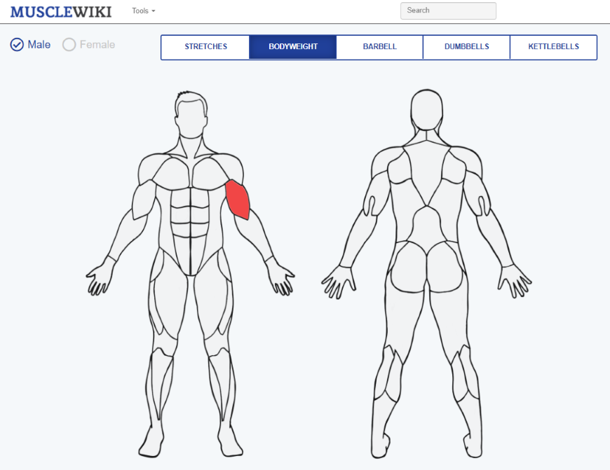 Muscle Wiki